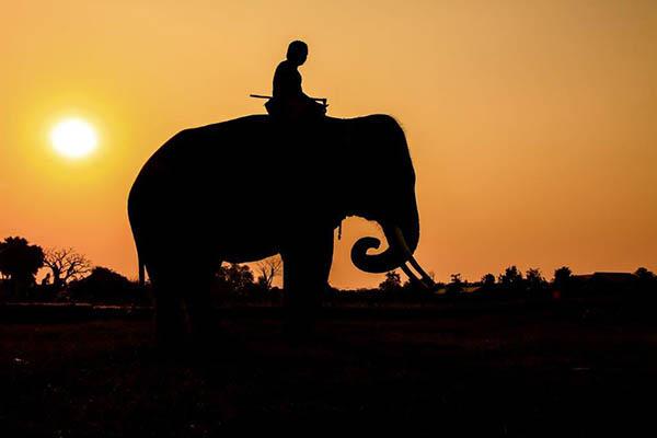 Homem sentado em elefante em África a ilustrar a diarreia do viajante