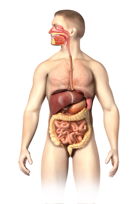 Doenças digestitvas