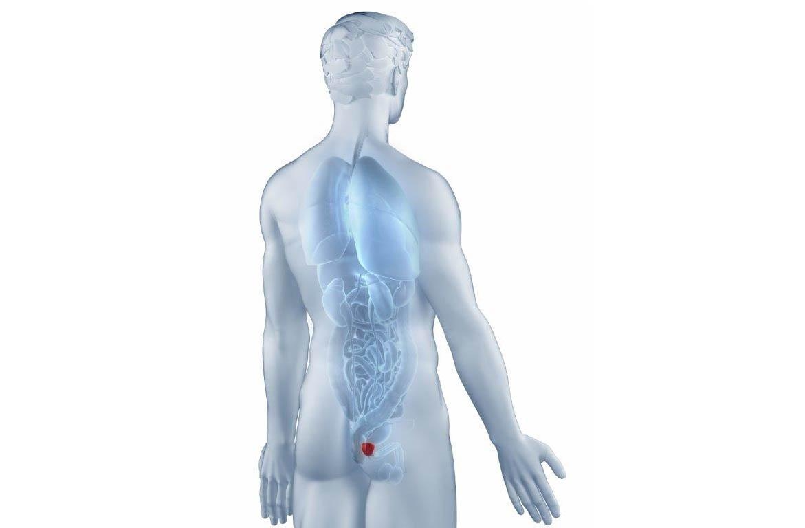 Identificação da próstata no corpo do homem