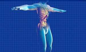 Corpo humano com sistema digestivo em destaque