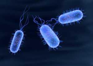Bacilos ou bactérias causadoras de infeções