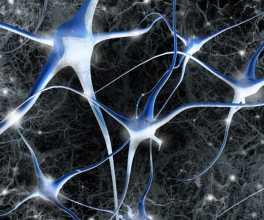 Neurónio