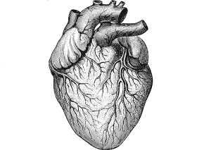 Coração humano desenhado a preto e branco